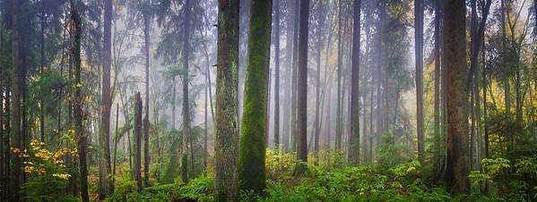 Still Forest
