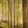 Boulder Trees