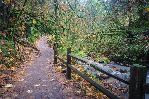 Mossy Trail