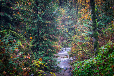 Stream Through the Trees