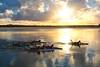 Heading For The Surf, Noosa River Sunset Sunshine Coast, Queensland, Australia