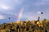 Chimping Rainbow at Noosa