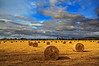 Haymaking Time Beaudesert Queensland (1)
