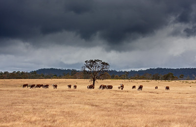 Storm Brewing, Tasmanian Tablelands