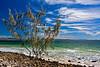 Noosa Seasacape (3)