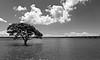 River Pine Estuary, Queensland