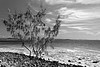 Noosa Bay