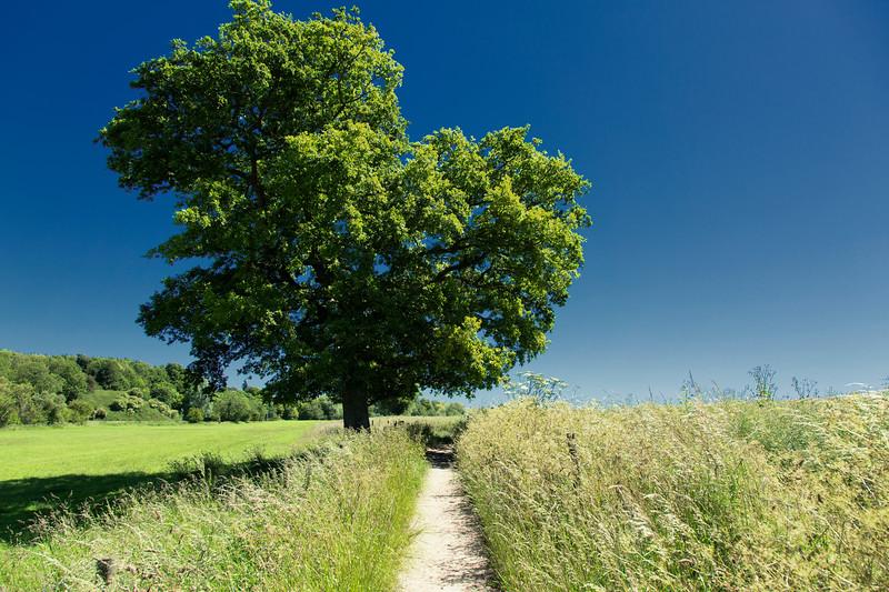 The Way, Avebury UK