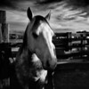 Horse at Sunrise, Ft. Worth Stockyards (October 2011)