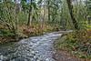 River at Jewell, Oregon