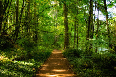 Trail at Battleground Lake State Park, Washington
