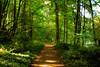 Trail at Battleground Lake State Park, Washington