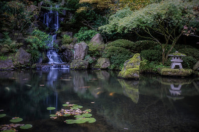 Waterfall and goldfish at Portland Japanese Garden