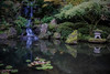Waterfall and goldfish at Portland Japanese Garden