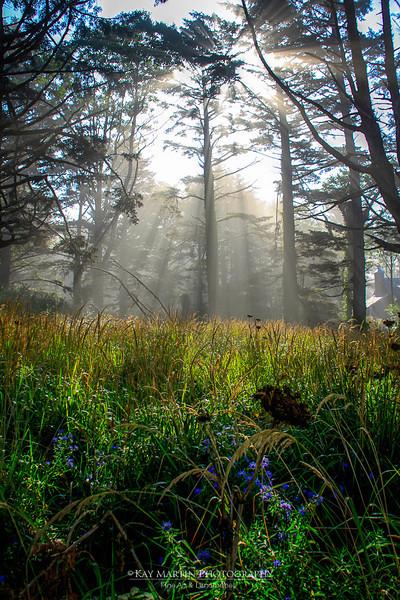 Sunlight and fog meet