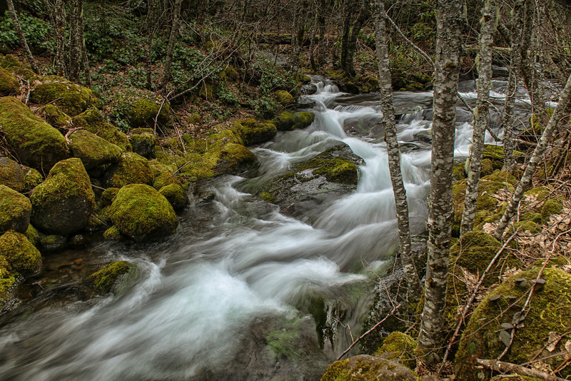 Creek in the Mt Hood National Forest