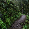 Rainforest hike in the Gorge