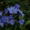 Flowers bloom at Zilker Botanical Garden