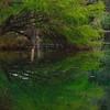 Tree bending over at Lake Austin