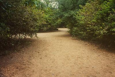 Dog park at Zilker Metropolitan Park