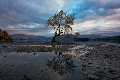 Wanaka Tree Reflection