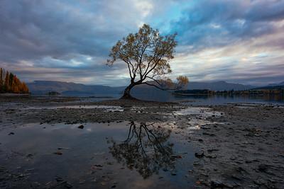 Wanaka Tree Reflection