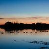 Silhouette Ducks on Pond