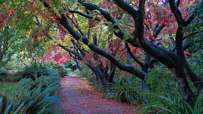 Under the Canopy Dunedin Botanic Gardens