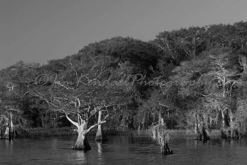 Blue Cypress Lake Shoreline - 1