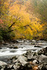 Little River Fall Color