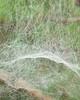 Spider Art 1