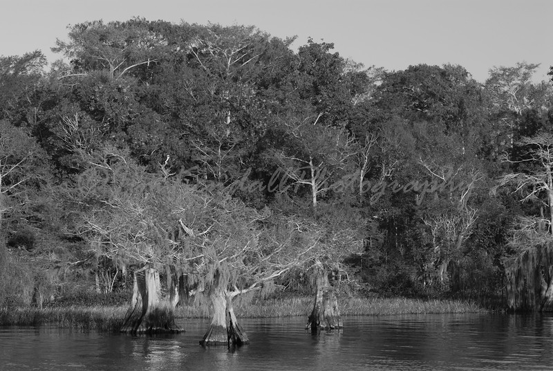 Blue Cypress Lake Shoreline - 2