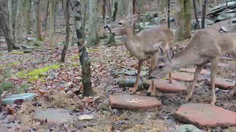 2015 Fawns