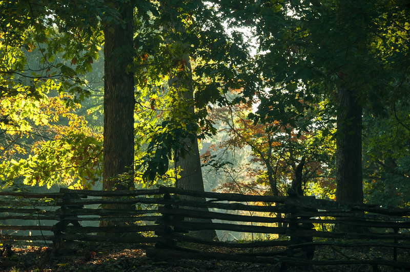 Wooded Serenity.