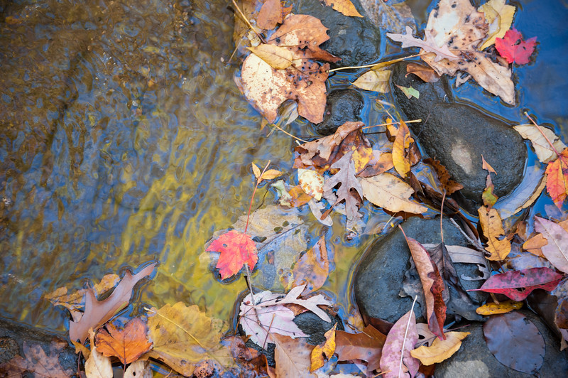 Autumn's Reflection.
