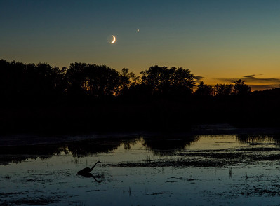 Twilight Conjunction and a Great Blue Heron