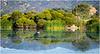 Las Gallinas Ponds, San Rafael, CA