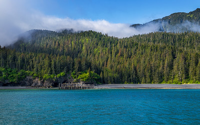 Forest Mist and Sea