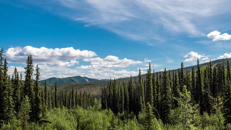 Tall Pines Panorama