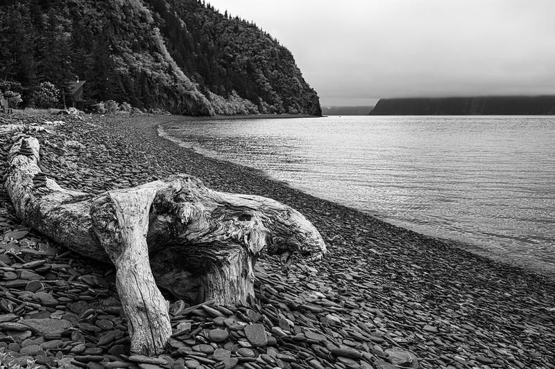 Dead Wood Fox Island