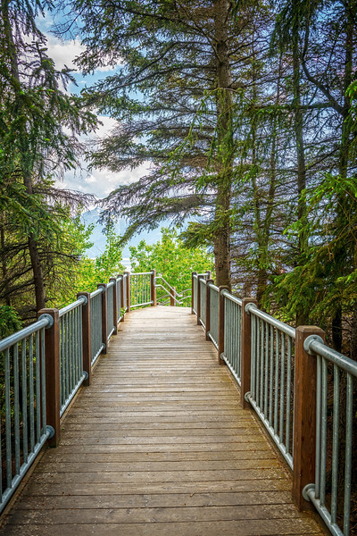 Pines Over the Footbridge