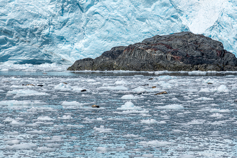 Ice Fields and Seals