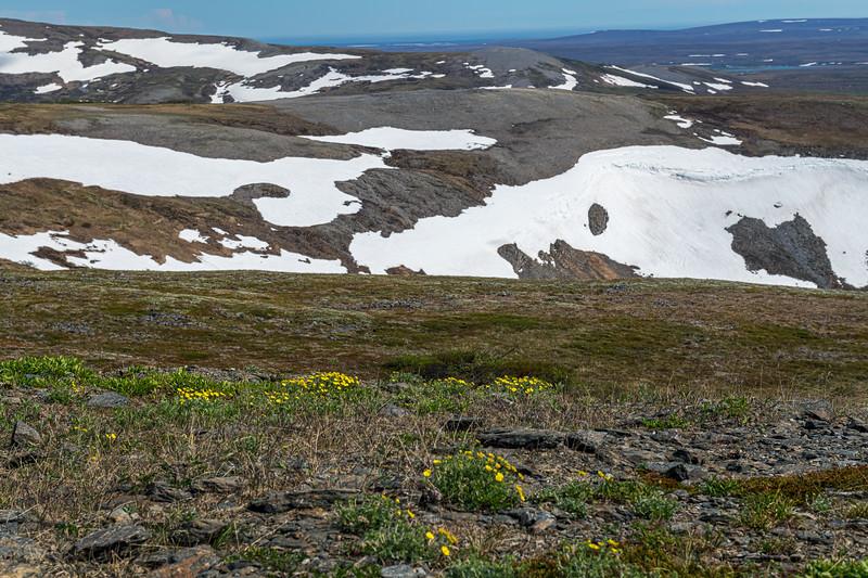 Snowcaps and Wildflowers