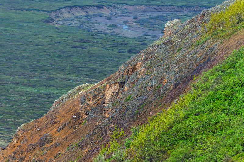 Dall Sheep High Upon Mountain