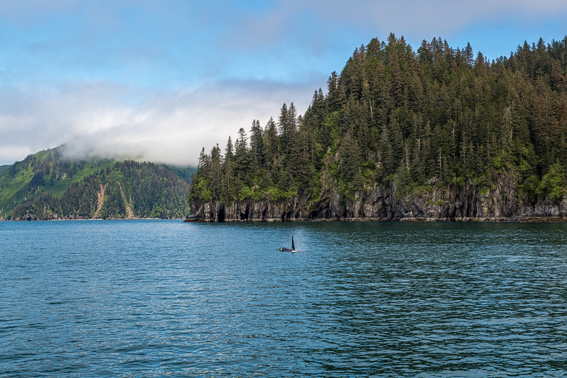 Orca Seascape