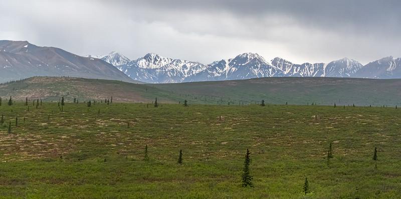 Denali Landscape Panorama
