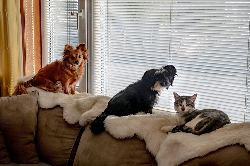 Pets at the Window