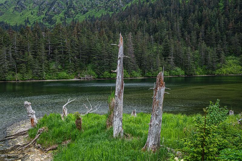 Tree Stumps on Island