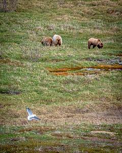 Bears and a Bird
