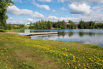 Dandelions and Lake